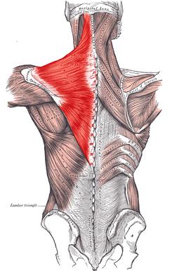 estiramientos para calmar el dolor de cuello